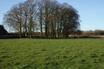 Paddock Field